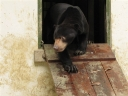 Bear exits the bear house