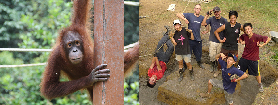 Students from Jerudong International School build training structures for Orangutans