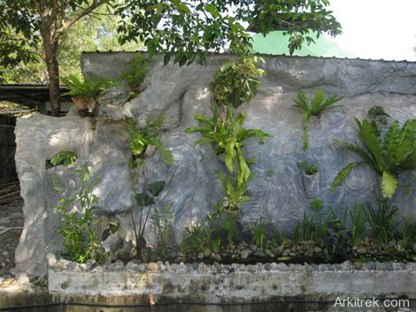 Wall stuffed with epiphytes